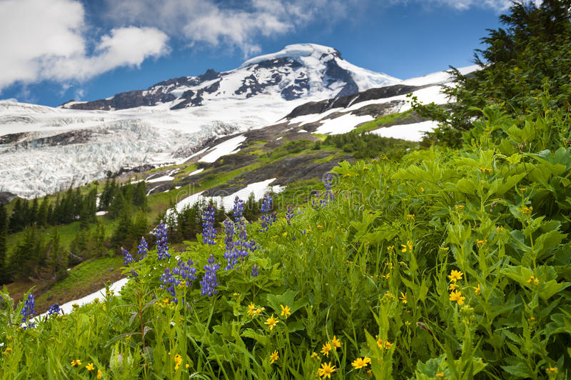 Download Mt. Baker Wildflowers stock image. Image of indian, hike - 39506559