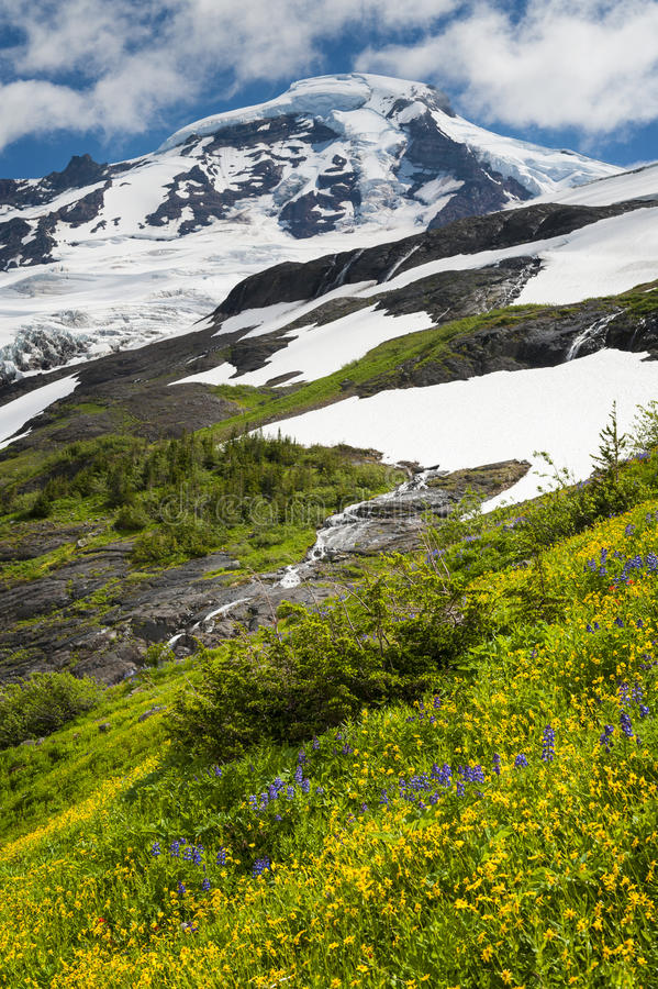 Download Mt. Baker Wildflowers stock photo. Image of baker, botany - 39506714