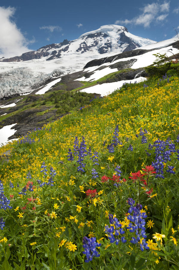 Download Mt. Baker Wildflowers stock photo. Image of paintbrush - 39506820