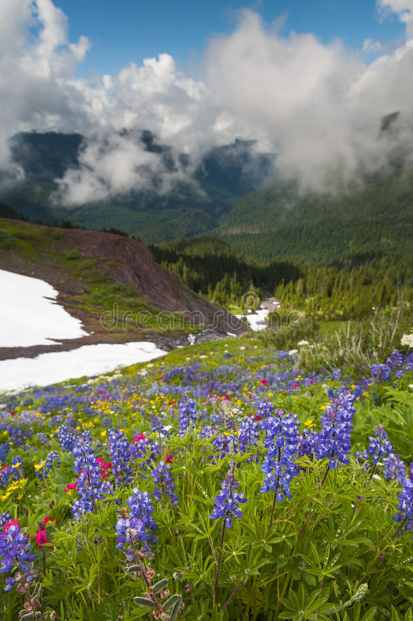 Mt. Baker Wildflowers. royalty free stock image