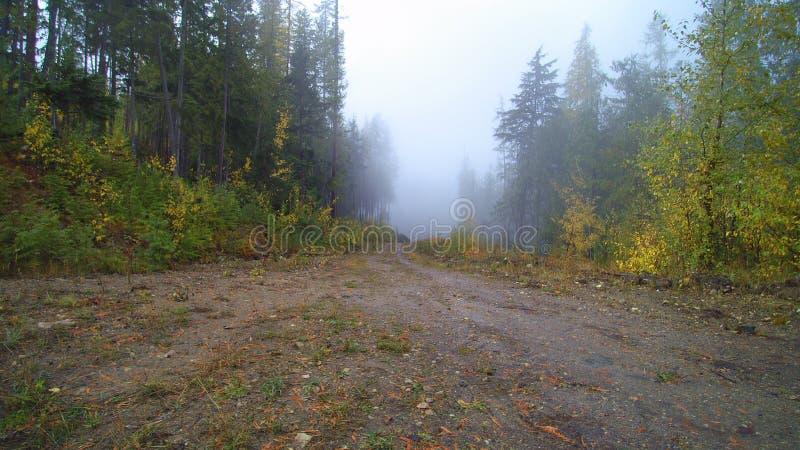Mt Bastian - дорога туманной горы стоковые фотографии rf