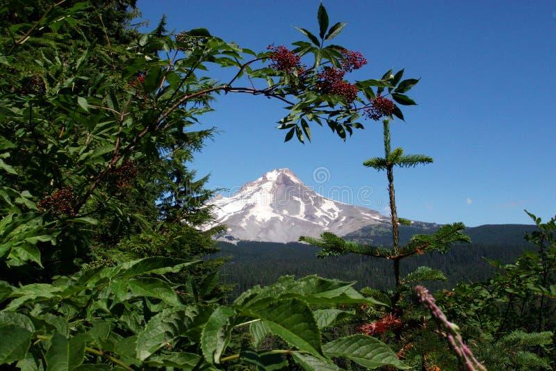 Mt. Capot en été photo stock