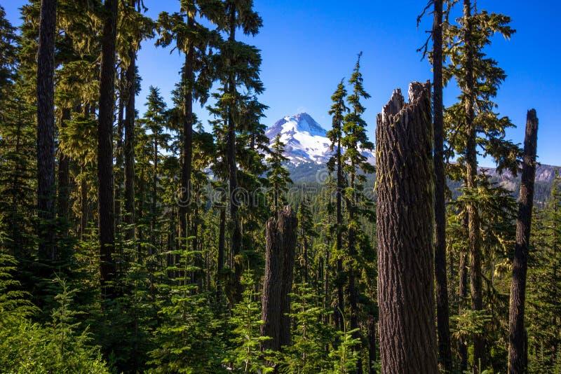Mt Capot par les arbres photographie stock