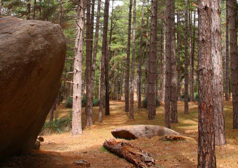 Mt Crawford Forest fotografering för bildbyråer
