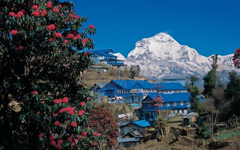 Mt Dhaulagiri, Ghorepani zdjęcie royalty free