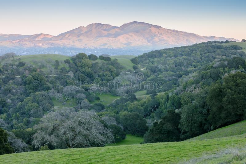 Mt Diablo as seen from Briones Regional Park at Sunset. Mount Diablo peeking through canyon of Oak trees and grasslands. Martinez, Contra Costa County stock image