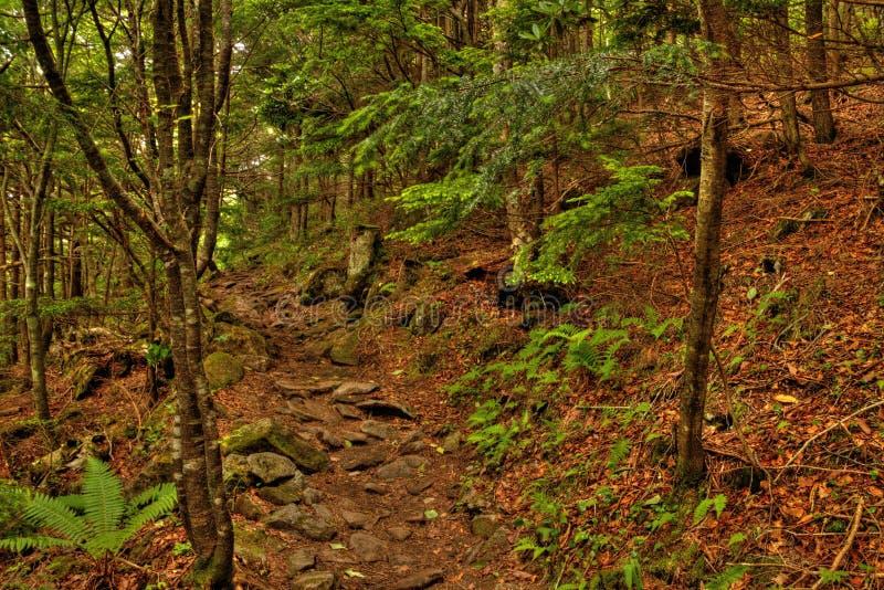 MT Eboshidake maakt deel uit Japanse Alpen in de Prefectuur van Nagano en is 2.066 meters lang stock foto