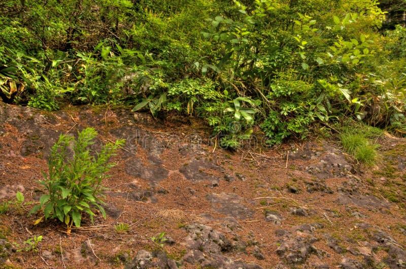 MT Eboshidake maakt deel uit Japanse Alpen in de Prefectuur van Nagano en is 2.066 meters lang stock foto's