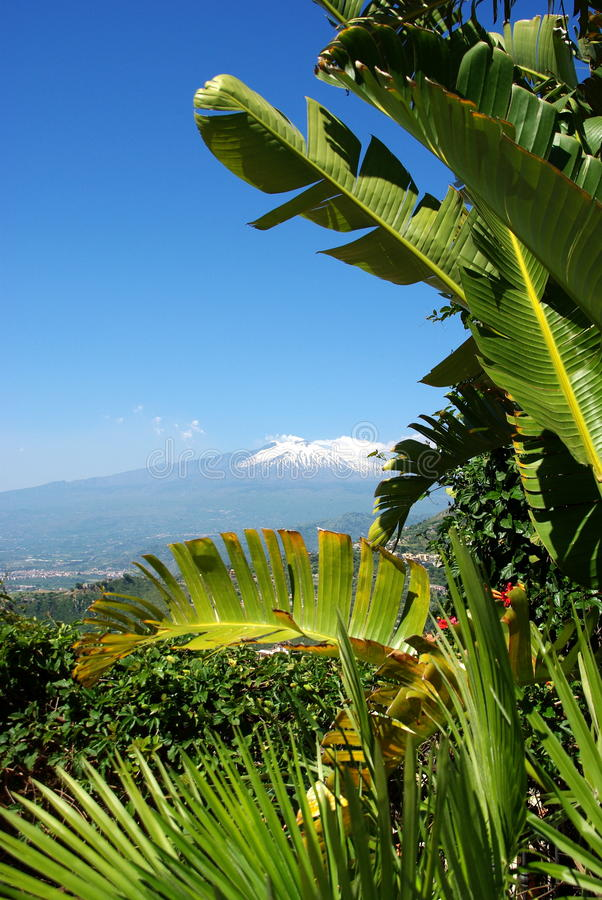 Mt Etna. Seen through palm leaves stock images