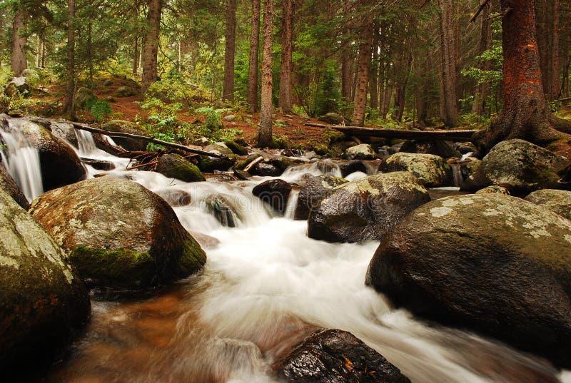 Mt Evans Forest immagini stock libere da diritti