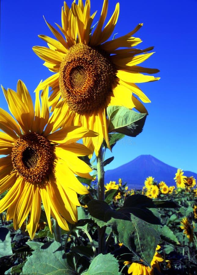 Free Mt Fuji-334 Royalty Free Stock Photos - 4599038