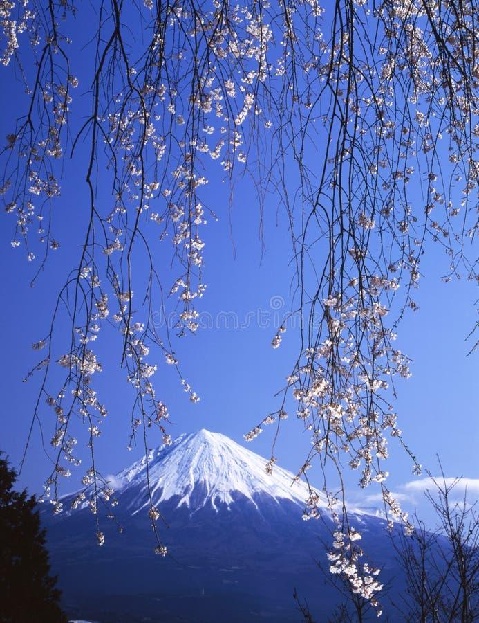 Mt fuji-370 image libre de droits