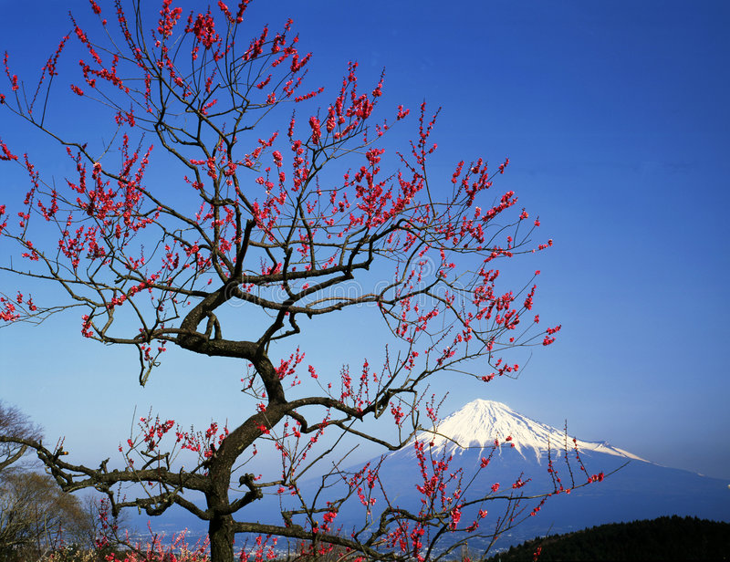 Mt fuji-385 royalty free stock image