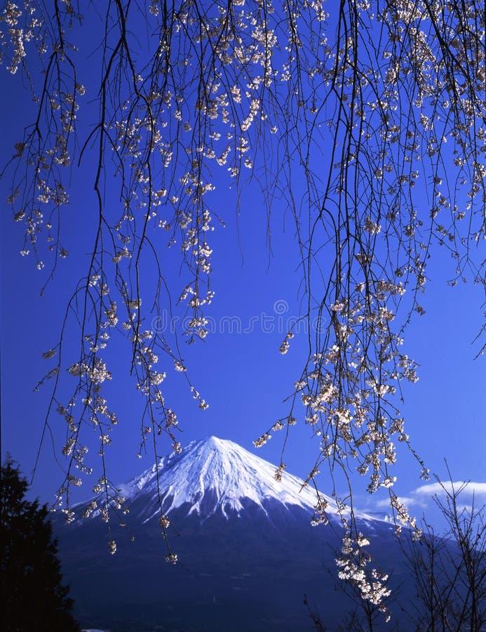 MT fuji-413 royalty-vrije stock fotografie