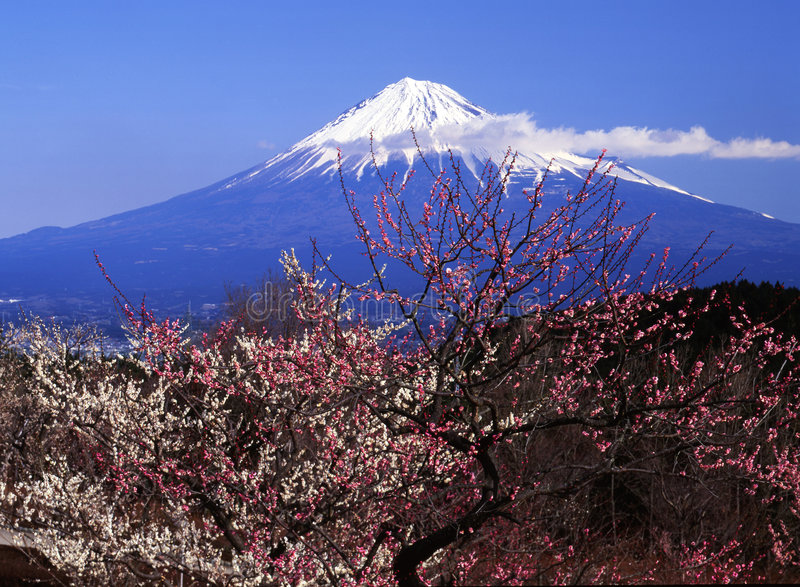 Download Mt fuji-415 stock image. Image of spring, bloom, float - 4612961