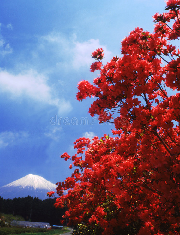 Mt fuji fotografia de stock royalty free