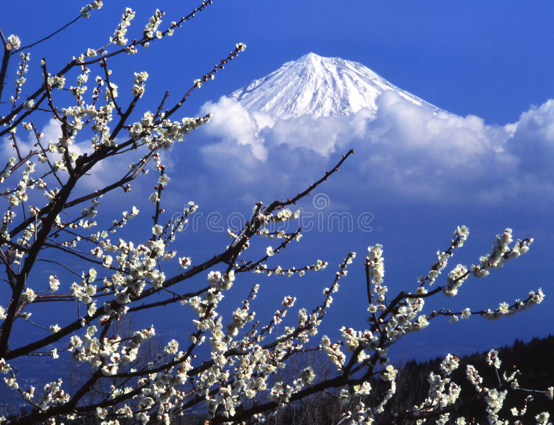 Download Mt fuji stock photo. Image of cloud, fine, white, apricot - 4587682