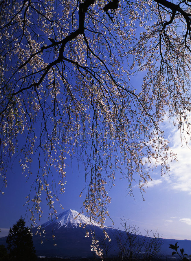 Download Mt fuji-477 stock photo. Image of blue, outdoors, japanese - 4612760