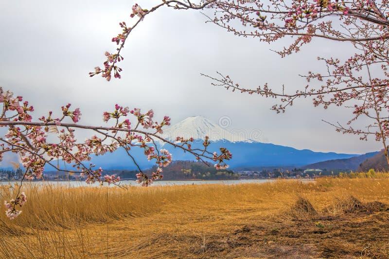 Download Mt Fuji stock image. Image of pink, flower, cold, sunrise - 39873917