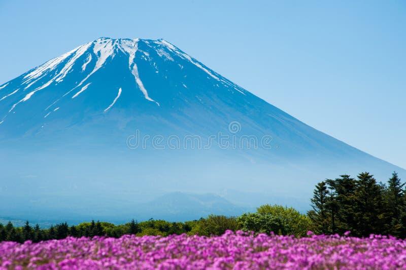 Mt Fuji com campo cor-de-rosa de Shibazakura fotos de stock