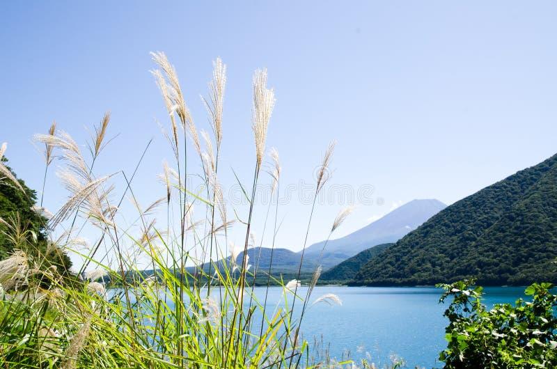 Mt Fuji con l'erba di pampa del giapponese in autunno, Giappone fotografia stock