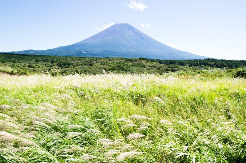 Mt Fuji con l'erba di pampa del giapponese in autunno, Giappone immagini stock