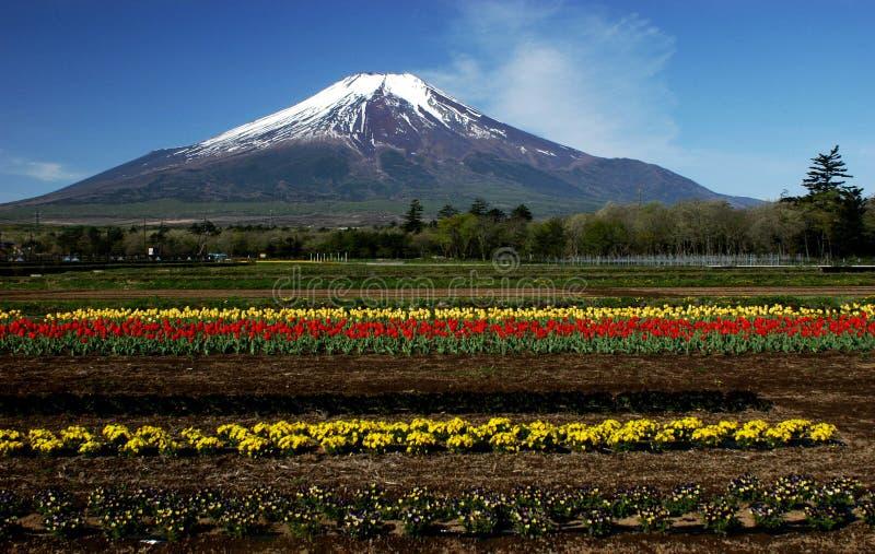 Mt fuji dg-22 imagem de stock