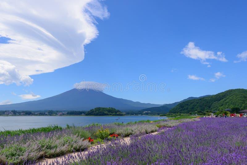 MT Fuji en Lavendel bij Oever van het meer van Kawaguchi royalty-vrije stock afbeeldingen