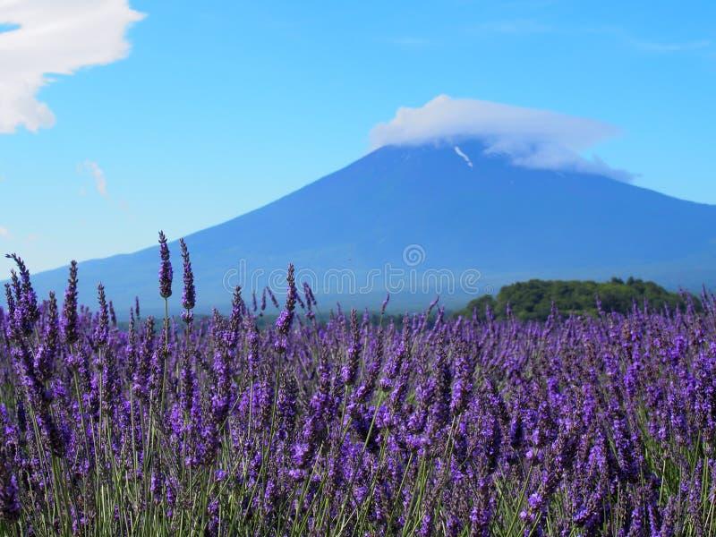 MT Fuji en Lavendel bij Oever van het meer van Kawaguchi royalty-vrije stock afbeelding