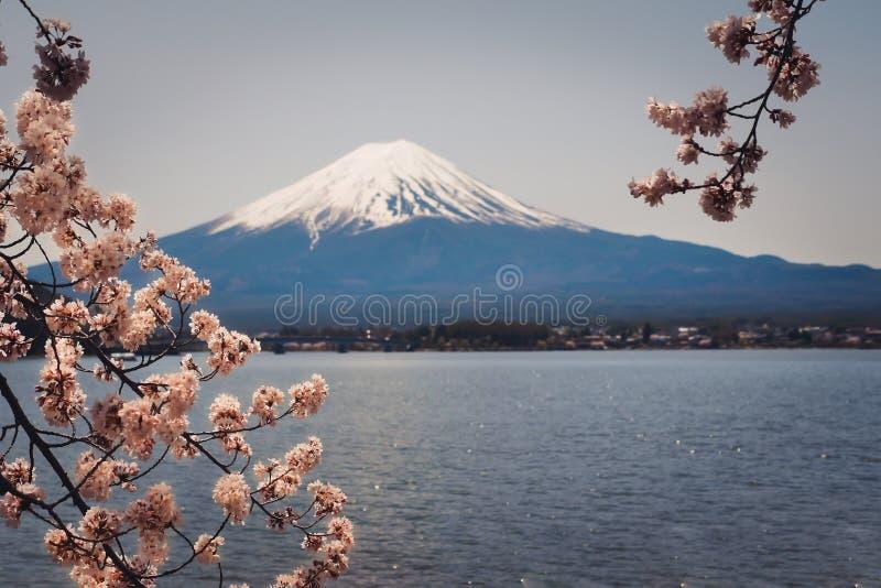 Mt Fuji est entouré par de belles fleurs de cerisier C'est une destination rêveuse pour des voyageurs au Japon photos libres de droits