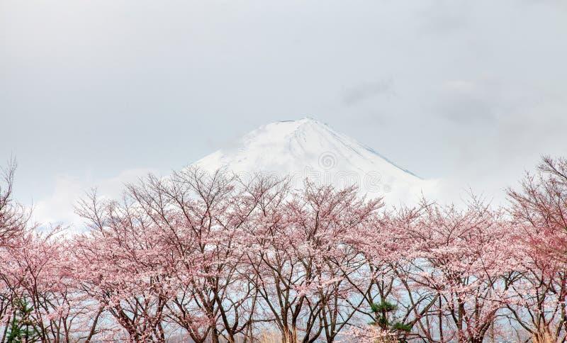 mt fuji et arbre rose au printemps kaw de fleurs de cerisier photo stock image du horizon. Black Bedroom Furniture Sets. Home Design Ideas