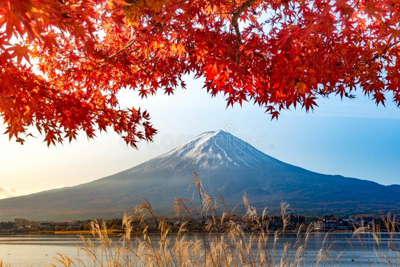 Mt Fuji i höst bak trädet för röd lönn från sjön Kawaguchi arkivfoton