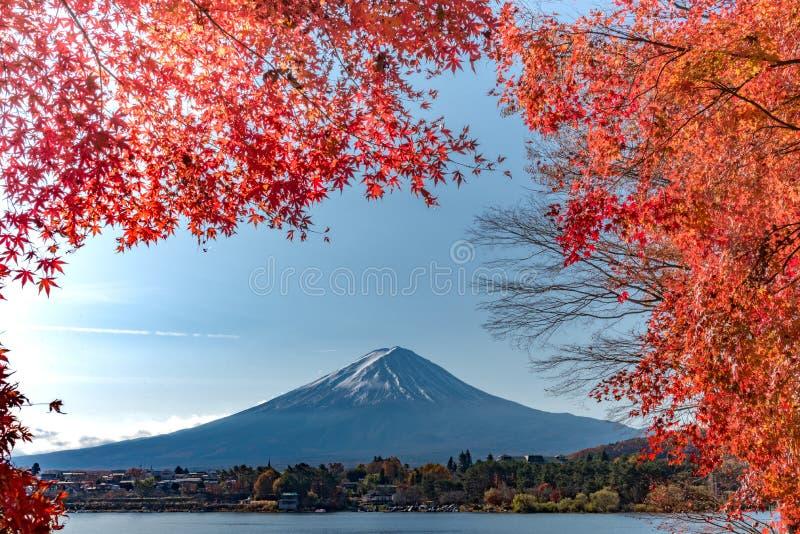 Mt Fuji i höst bak trädet för röd lönn från sjön Kawaguchi i Yamanashi royaltyfria bilder