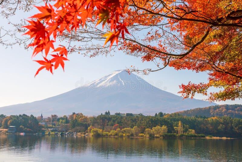 Mt Fuji im Herbst mit Rotahornblättern stockfotografie