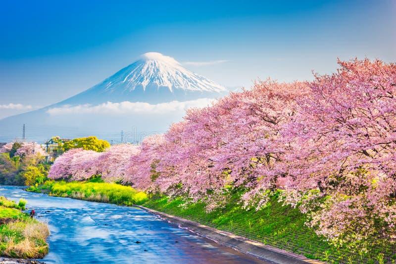 Mt. Fuji, Japan spring landscape royalty free stock image