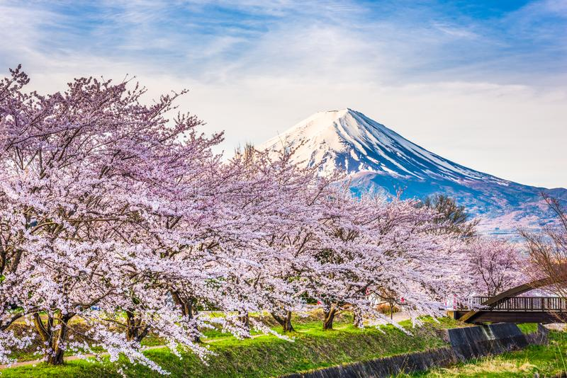 Mt. fuji Japan in Spring royalty free stock photos