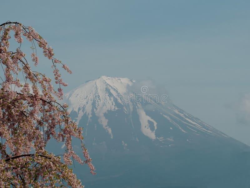 Mt Fuji och Sakura royaltyfria foton