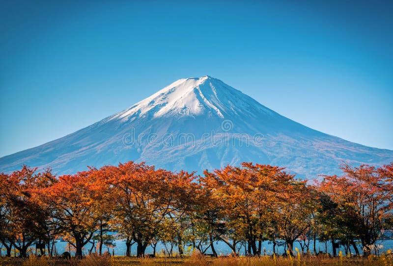 Mt Fuji på bakgrund för blå himmel med höstlövverk på dagen i Fujikawaguchiko, Japan royaltyfria bilder
