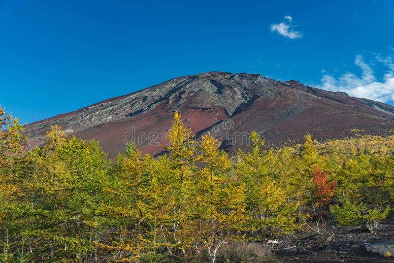 MT Fuji` s piek met blauwe hemel en pijnboombomen in de vroege herfst stock afbeelding