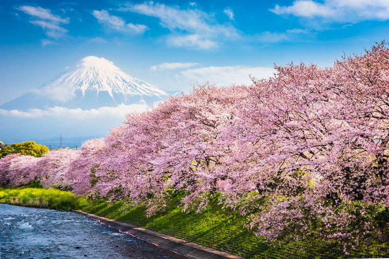 Download Mt. Fuji in Spring stock image. Image of park, canal - 107005503