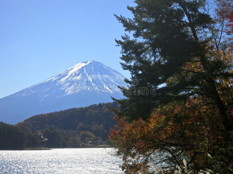 Mt. Fuji and Trees. Mount Fuji, Japan's famous mountain, with some trees, a pine tree and a yellow-leafed tree, in front royalty free stock photography