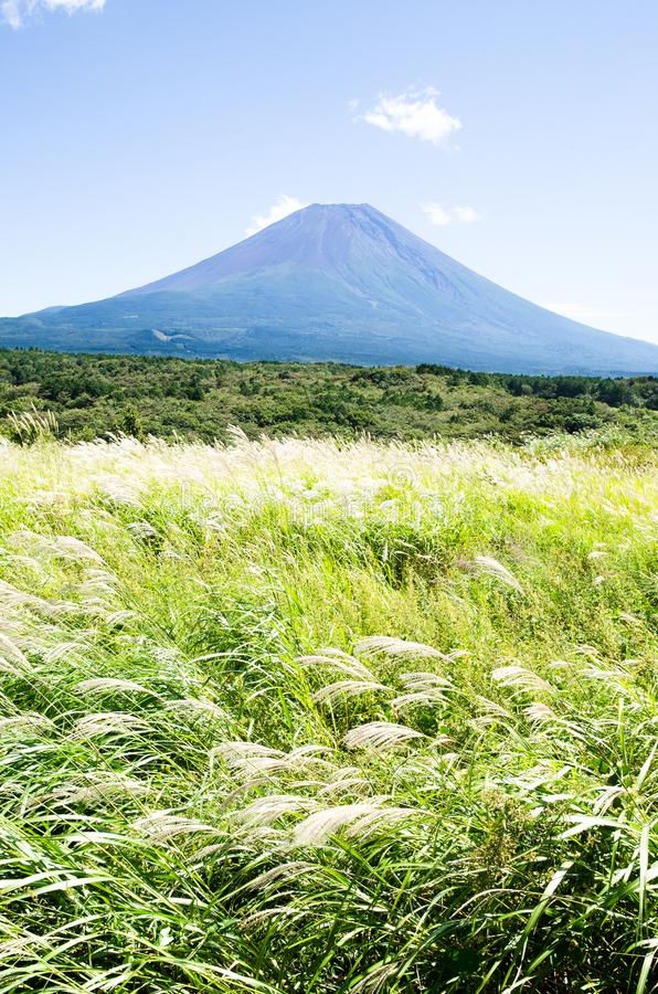 Free Mt. Fuji With Japanese Pampas Grass In Autumn Stock Photos - 100409883