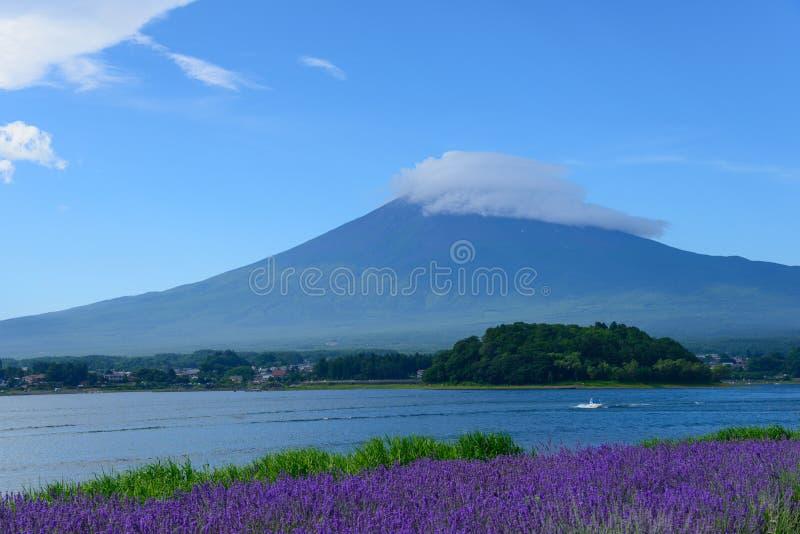 Download Mt Fuji Y Lavanda En La Orilla Del Lago De Kawaguchi Imagen de archivo - Imagen de fujiyama, paisaje: 42443437