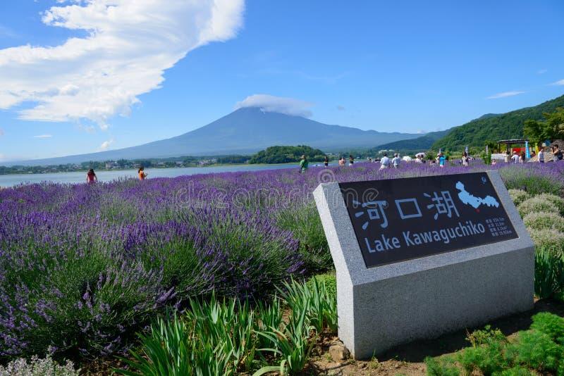 Download Mt Fuji Y Lavanda En La Orilla Del Lago De Kawaguchi Foto de archivo - Imagen de fujiyama, fuji: 42443562