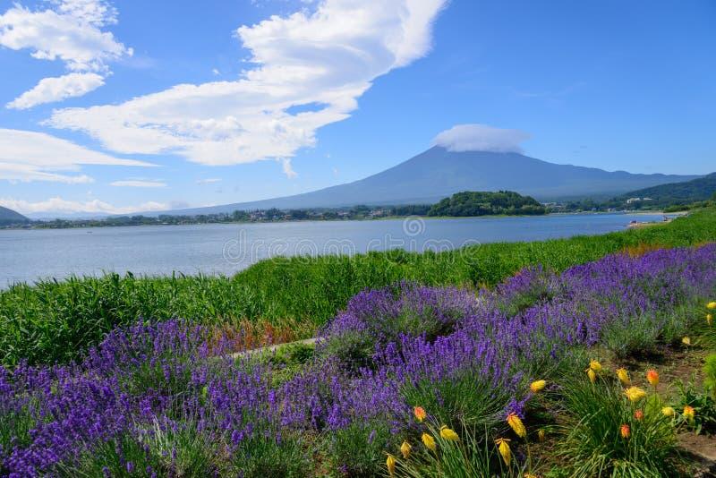 Download Mt Fuji Y Lavanda En La Orilla Del Lago De Kawaguchi Imagen de archivo - Imagen de sightseeing, montaña: 42443585