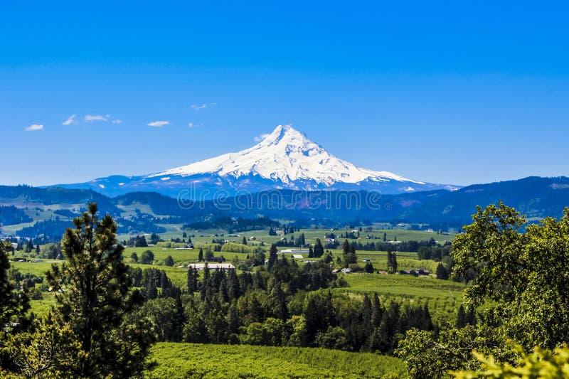 Mt.Hood fotografia de stock