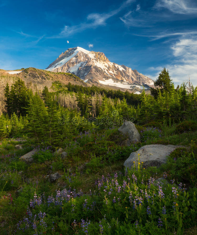 Mt. Hood and alpine meadow stock photography