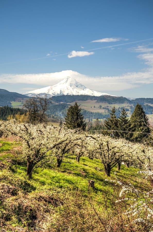 Download Mt Hood, Apple Orchards, Oregon Stock Photo - Image: 29606610