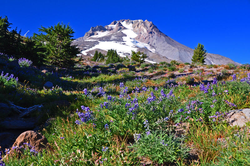 Mt. Hood, Oregon royalty free stock photography