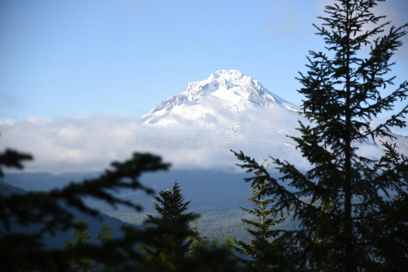 Mt. Hood Oregon. From the trees stock photo